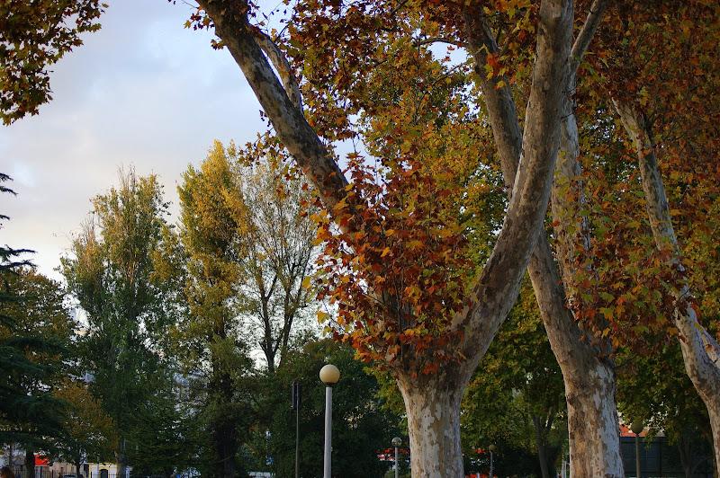 Outono no Jardim do Bonfim, Setúbal