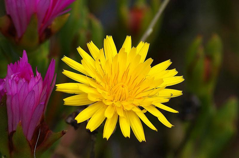 Detalhes.. flor de dente de leão