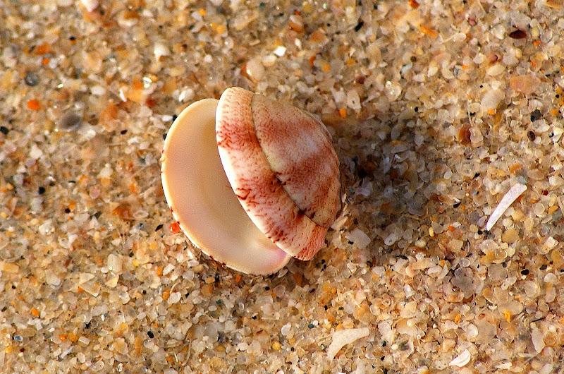 Conchas na areia da Praia em Troia