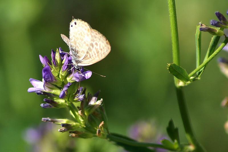 Detalhes de verão, a borboleta