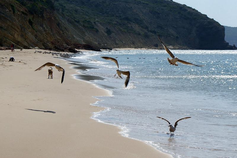 Gaivotas na Praia, Salema, Algarve