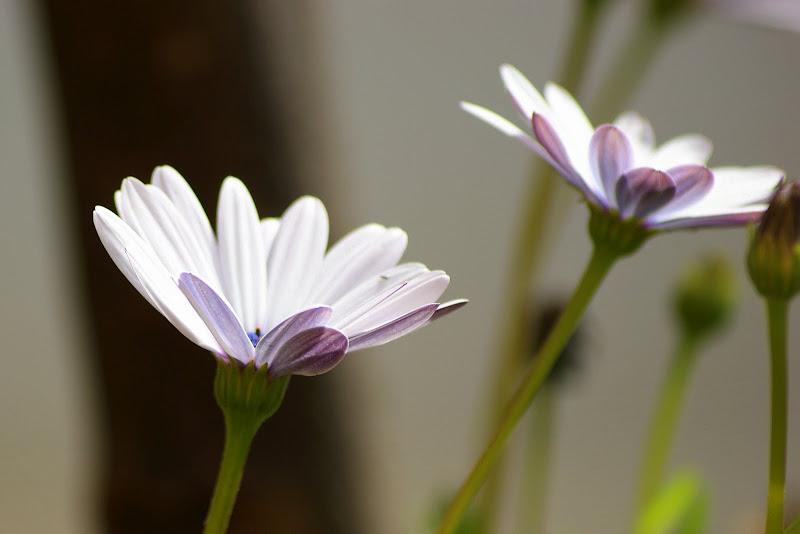 Flores em perspectiva