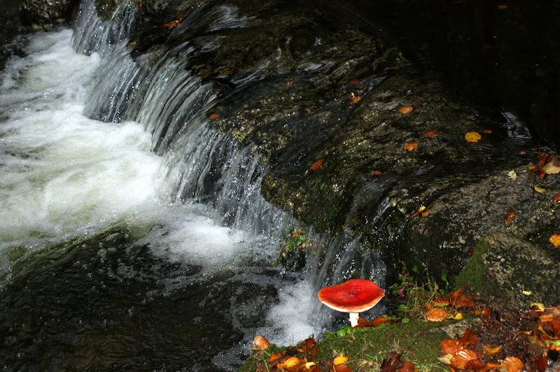 O cogumelo no Gerês