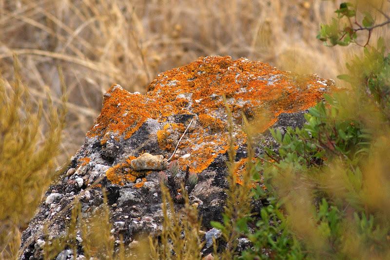 Musgo nas rochas, Serra do Louro
