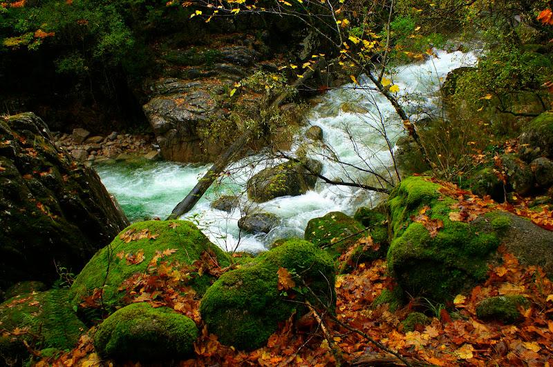 Mata da Albergaria, Outono no Gerês