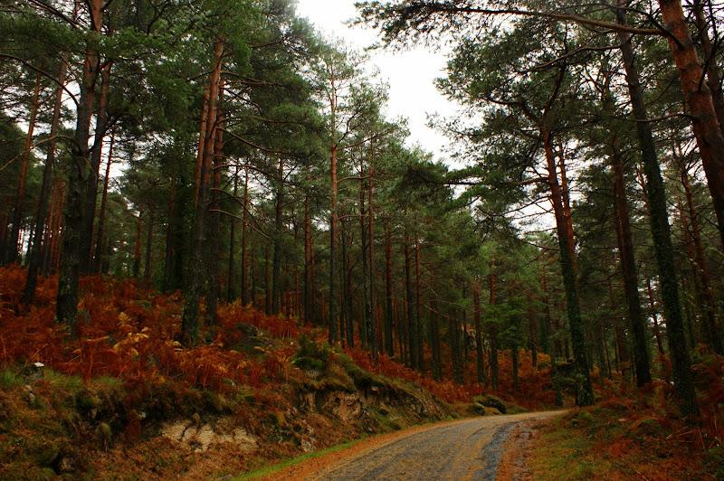 Caminhante não há caminhos, faz-se o caminho ao andar
