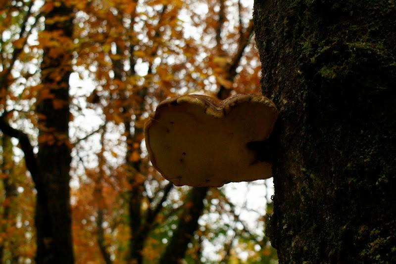 Outono no Gerês, detalhes