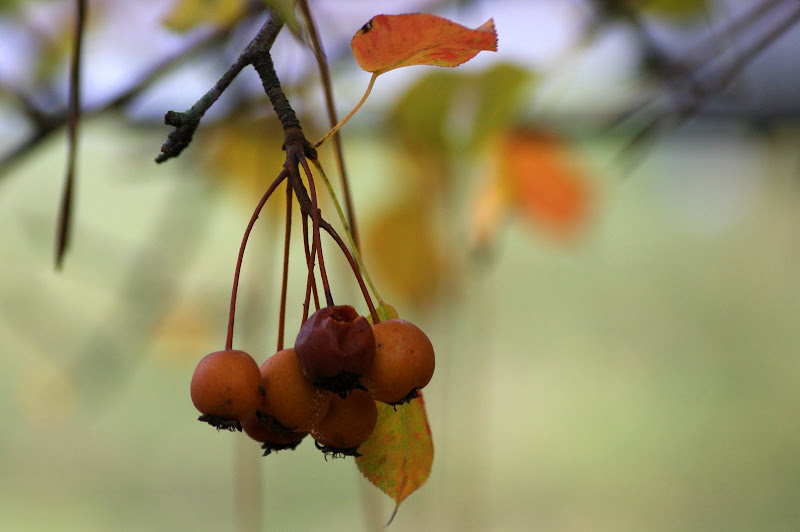 Folhas do Outono no Gerês
