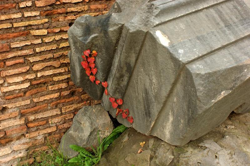 Roma, Fim de tarde no Foro Romano