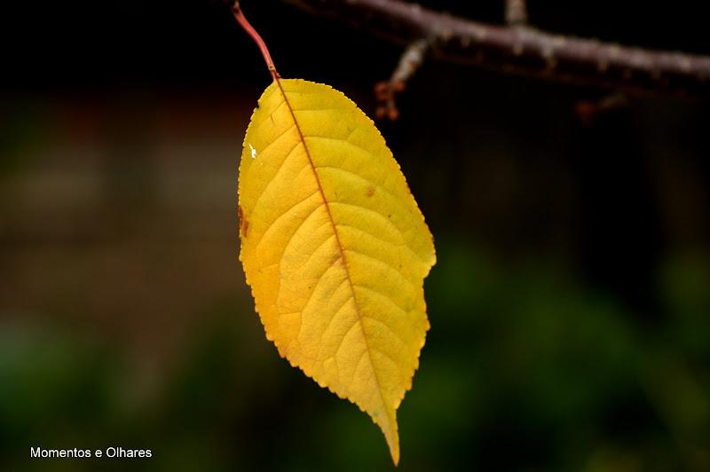Folha com ar de Outono