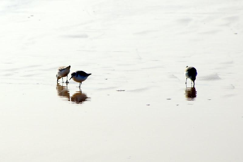 Aves na praia
