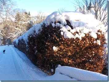 6th January snow 016