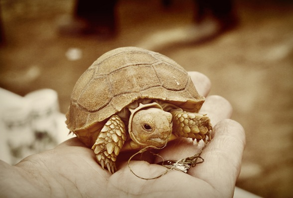 tea and turtles013