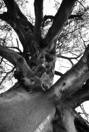 tree1_resize