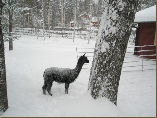 Oprah loves the snow!