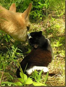 pingla og mus