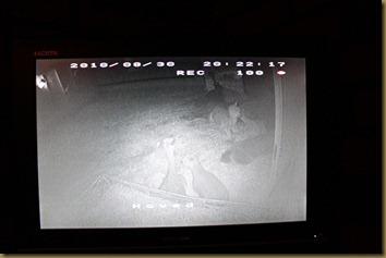 Bilde fra overvåkingen av jentehuset