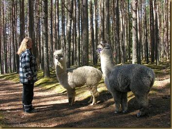 Nina med Corazon og Viella på tur i skogen