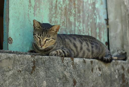 分享-猴硐訪貓記-人比貓多