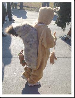 pust v Dornavi 2011 veverice (3)