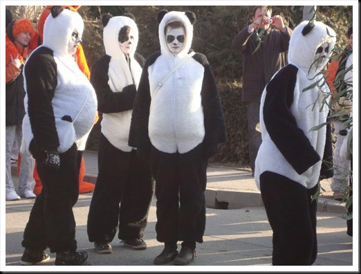 pust v Dornavi 2011 panda (4)
