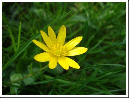bloom (20)