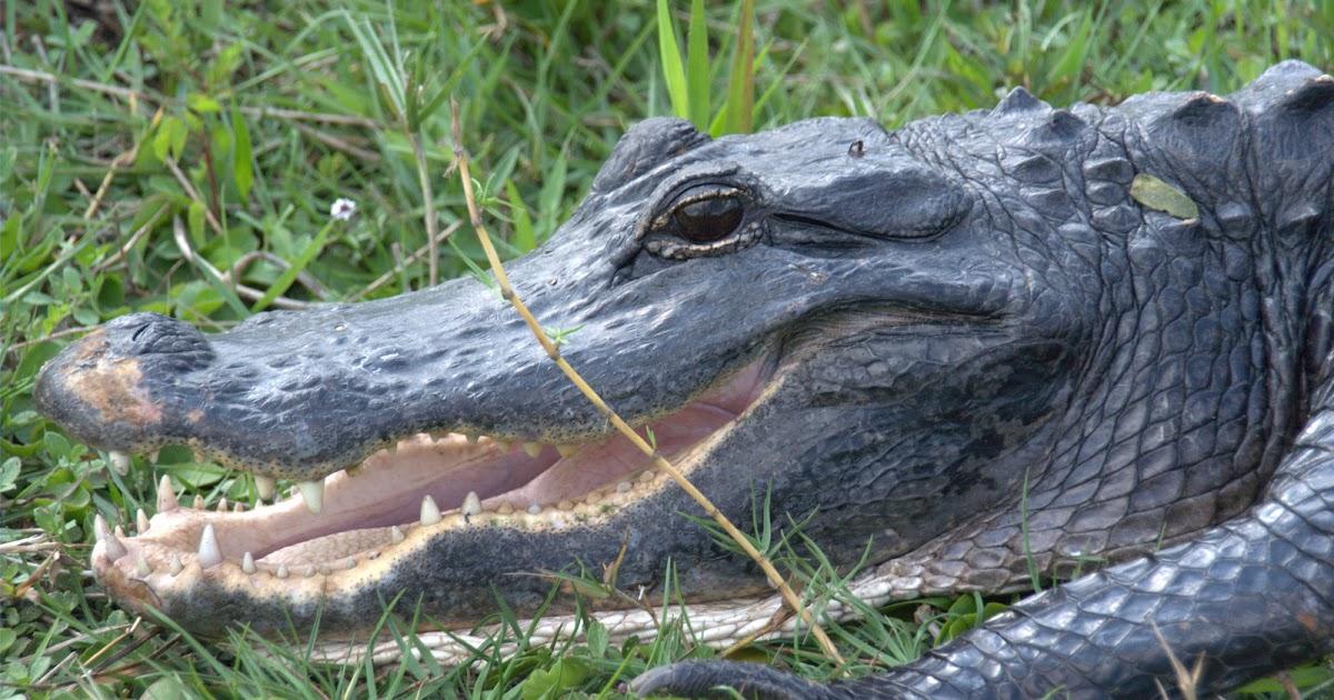 Fernweh: Everglades, Day 1 - Shark Valley