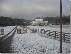 snow 029