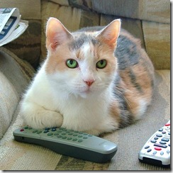 cat-w-remote-control (Small)