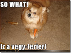 dog-Vegie-terier (Small)