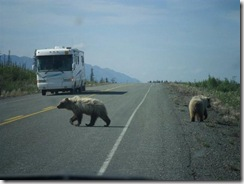 Bears-on-hiway- (Small)