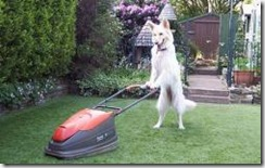 dog-lawn-mower_thumbnail