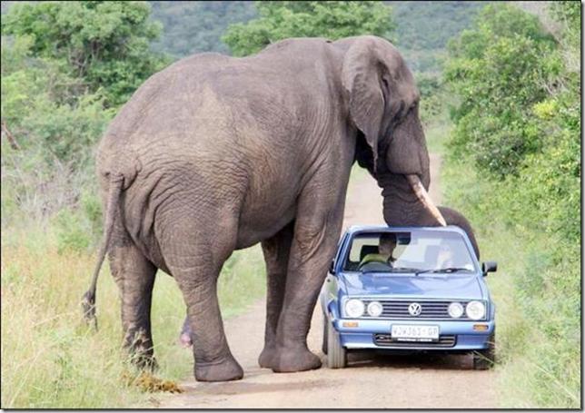 Jumbo and car (Small)