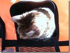 Bobbie-in-stroller9-1