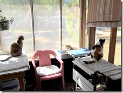 Cats-on-porch-2010-Oct