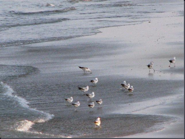 Virginia Beach 017