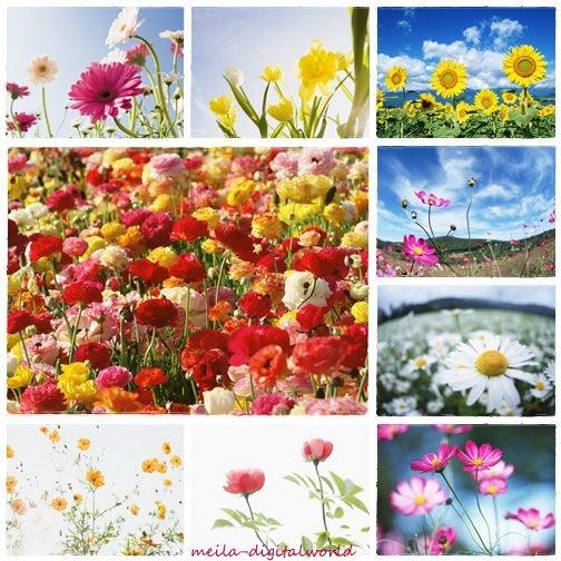 flower wallpaper. Flowers Wallpapers Mega Pack