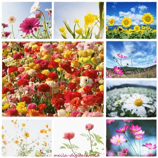 3d Wallpaper Of Flowers. wallpapers for flowers.