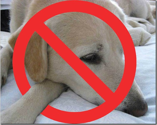 Connor-for-Sun copy