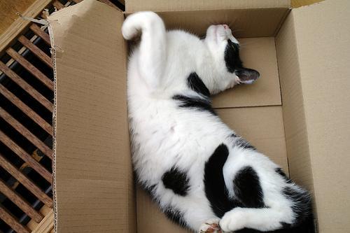 gatos durmiendo en cajas