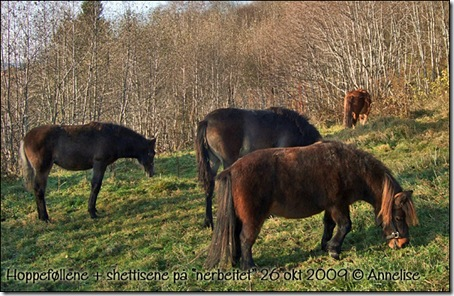 nerbeitet-26okt2009_05