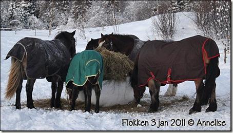 2011-3jan-flokken