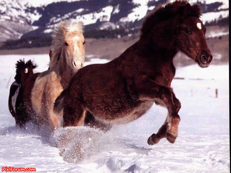 Horses in Their Natural Environment - Beautiful Images
