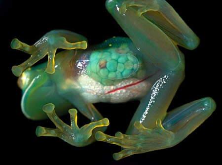 Top 10 Transparent Animals!