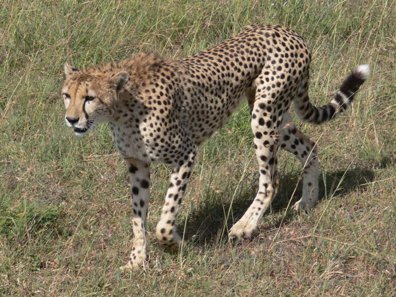 :::Amazing wildlife pictures ---- in Kenya :::
