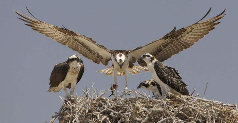 Truly Lovely Animals'/Birds' Photos