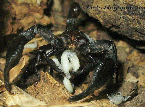 Birth of A Scorpion - Photos