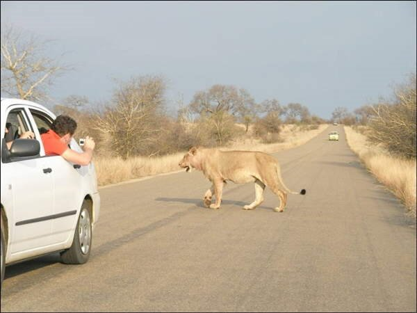 Wildlife on the Road! What to expect when driving through a safari/reserve. In which vehicle would u rather be? ;)