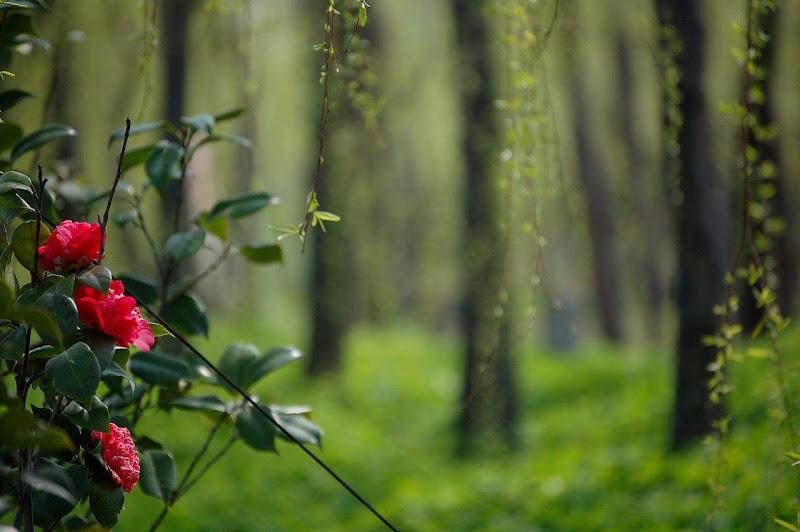 Glorious Spring ....
