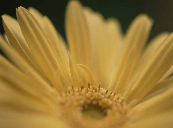 Flowers: Extreme Closeup Photos (feel the beauty)